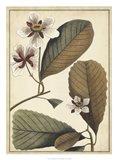 Ivory Botanical Study III Art Print