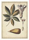 Ivory Botanical Study IV Art Print
