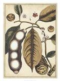 Ivory Botanical Study V Art Print