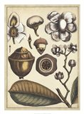 Ivory Botanical Study VI Art Print