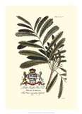 Royal Botanical III Art Print