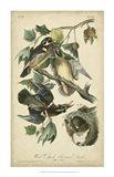 Audubon Wood Duck Art Print