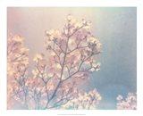 Flowering Dogwood I Art Print