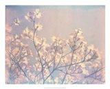 Flowering Dogwood II Art Print
