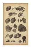 Study of Shells I Art Print
