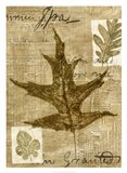 Leaf Collage II Art Print