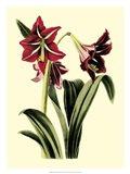 Royal Botanical Study I Art Print