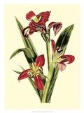 Royal Botanical Study II Art Print