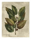 Tree IV Art Print