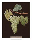 White Grapes Art Print