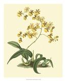 Antique Orchid Study I Art Print