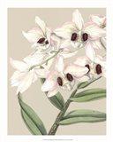 Orchid Blooms II Art Print