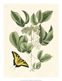 Butterfly and Botanical II Art Print