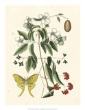 Butterfly and Botanical III Art Print