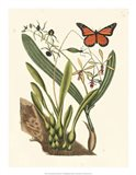 Butterfly and Botanical IV Art Print