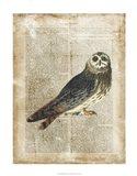 Antiquarian Birds I Art Print