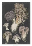 Genus Clavaria I Art Print