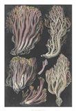 Genus Clavaria II Art Print