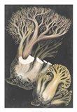 Genus Clavaria III Art Print