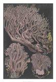 Genus Clavaria IV Art Print