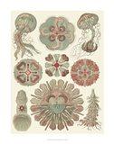 Sophisticated Sealife IV Art Print