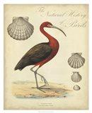 Heron Anthology II Art Print