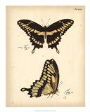 Butterfly Profile I Art Print