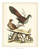 Regal Pheasants I Art Print