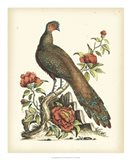 Regal Pheasants III Art Print