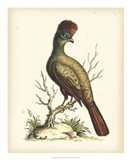 Regal Pheasants IV Art Print