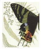 Butterfly Symmetry I Art Print