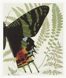 Butterfly Symmetry II Art Print
