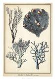 Coral Species II Art Print