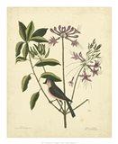 Bird & Botanical I Art Print