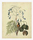 Bird & Botanical II Art Print