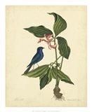 Bird & Botanical IV Art Print
