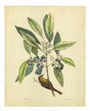 Bird & Botanical V Art Print