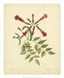 Bird & Botanical VI Art Print
