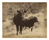 Lone Star Cows I Art Print
