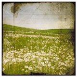 Field I Art Print