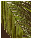 Batik Frond II Art Print