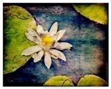 Kenilworth Lilies I Art Print