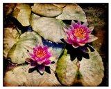 Kenilworth Lilies II Art Print
