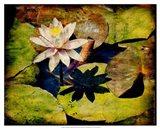 Kenilworth Lilies III Art Print