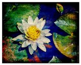 Kenilworth Lilies IV Art Print
