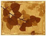 Ghost Leaves I Art Print