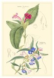 Botanical IV Art Print