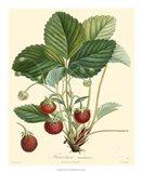 Strawberries Art Print