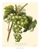 Grapes I Art Print