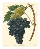 Grapes II Art Print